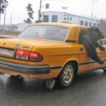 Bear Taxi