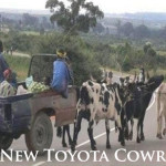 The New Toyota Cowrolla