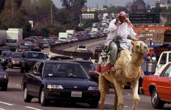 car-joke-funny-humor-traffic-jam-late-for-work | Car Humor