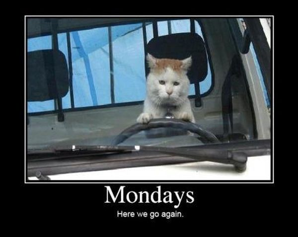 car-humor-funny-joke-road-street-drive-driver-mondays-cat
