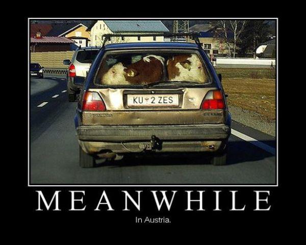 car-humor-funny-joke-road-street-drive-driver-meanwhile ...