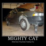 Mighty Cat