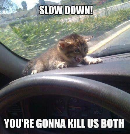 Slow Down - Car humor