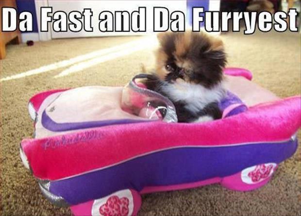 Da Fast Da Furryest