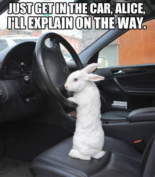 Bunny Driving