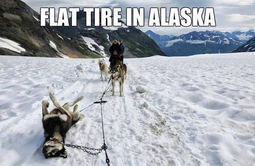car-humor-funny-Flat tire in Alaska