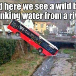 Wild Bus Drinking Water