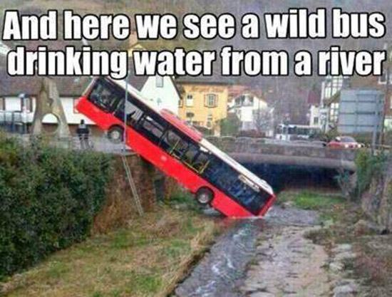 Wild Bus Drinking Water